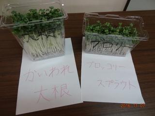 スプラウト 再生 ブロッコリー やってみよう!リボーンベジタブル(再生野菜)|稲沢市公式ウェブサイト